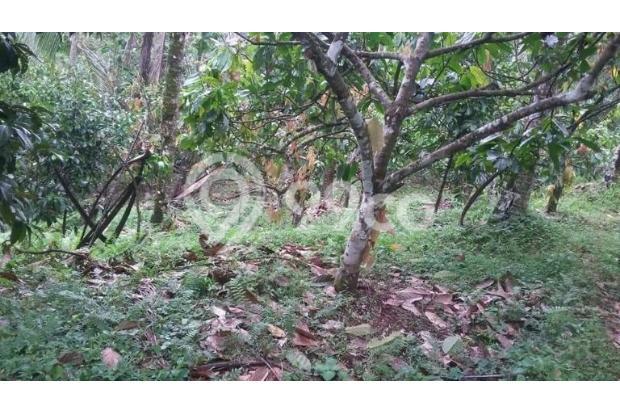 Tanah Kebun / tegalan Manikyang Selemadeg tabanan 15789183