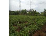 Lelang Tanah Kosong Daihan Industrial Estate