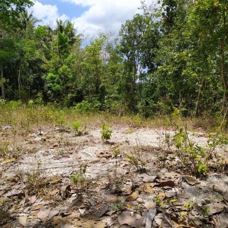 (LK) Tanah Shm Pekarangan Murah Jalan Wates