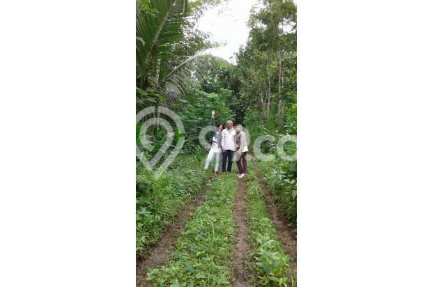 Dijual 1 bukit diatas puncak wisata alam seribu batu dlingo bantul yogya 15424445
