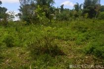 Massive land for sale in rural hinterland of Blacan - Payangan