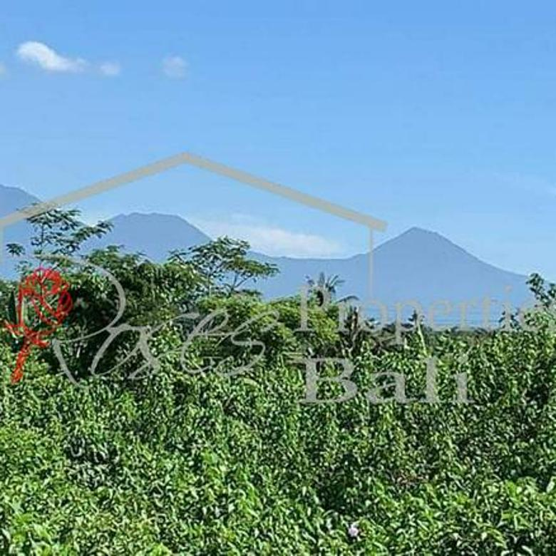 Covid19 Offer - Excellent River Side 2995m2 Land in Tegalallang Taro (Ubud)