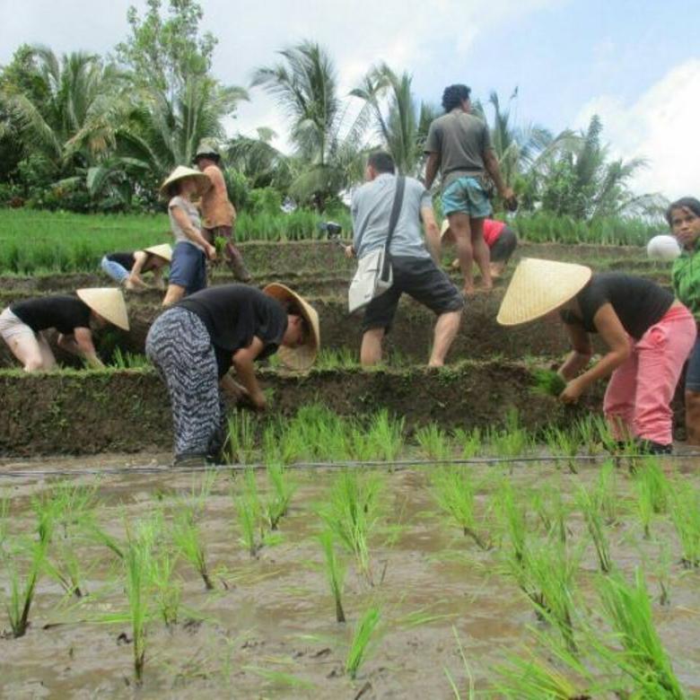 Pasive Income !!! Pasti Ciamik Disewakan Resort Pupuan Tabanan Bali