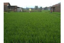 Tanah Sawah di Batujajar Kab. Bandung Barat