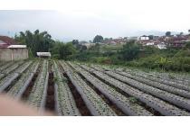 Tanah pertanian lembang Bandung
