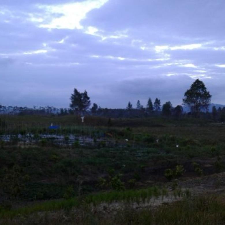 DIJUAL LAHAN 10.000 M2 di Dolok Sanggul