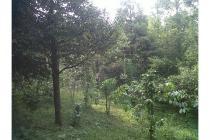 Jual Tanah di Cipanas dekat Taman Bunga Nusantara Cocok untuk Villa