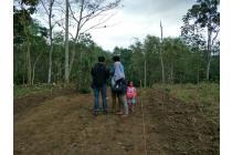 Tanah Murah Juwet Singosari