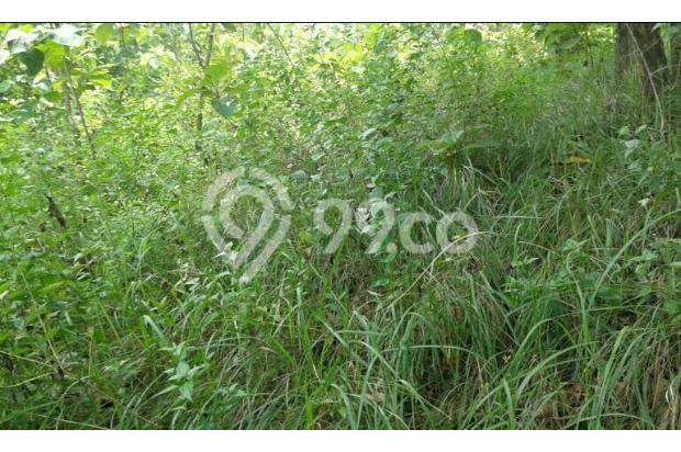 Dijual Murah Tanah Teduh 380 Meter 15422236