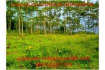Promo Tanah Kavling Murah di Bogor