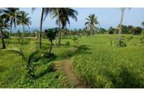 Dijual Tanah dan Sawah Murah Strategis di Cisolok, Pelabuhan Ratu, Sukabumi