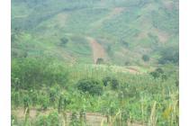 tanah investasi akses bagus murah dan aman kavling di puncak 2