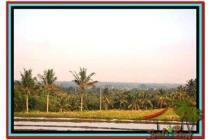 Tanah sangat Murah Spesial 1.400 m2 di Tabanan Selemadeg A143