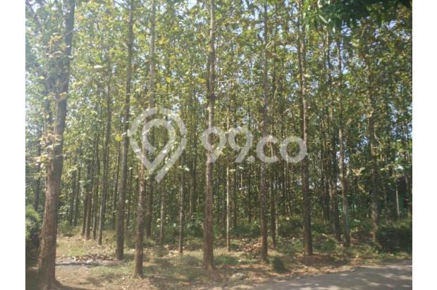 Tanah Kebun Jati di Boja Kendal Semarang Jawa Tengah 12398428