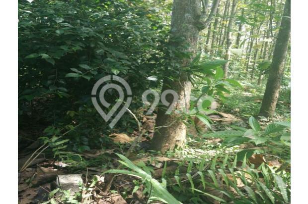 Tanah Kebun Jati di Boja Kendal Semarang Jawa Tengah 12398430