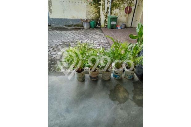 Dijual Rumah Kost Dekat Institut  Pertanian Stiper Yogyakarta 15893799