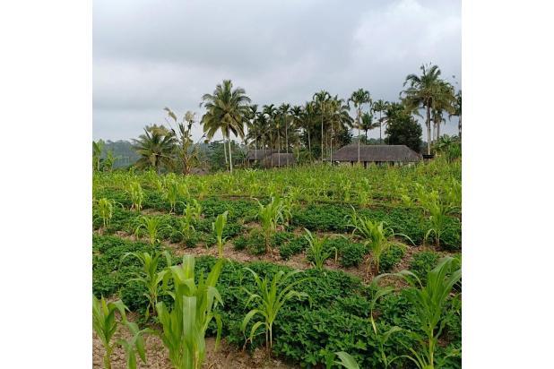 Rp7,74mily Tanah Dijual