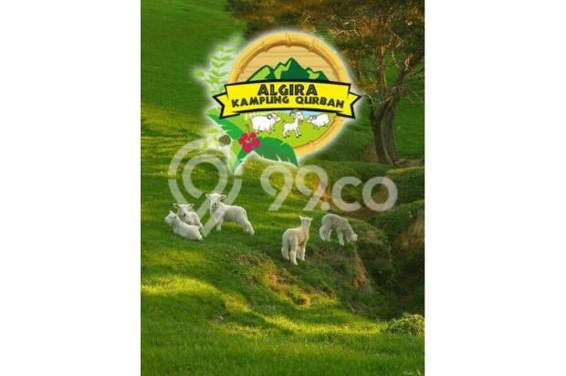 Kavling Wisata ternak di Bogor Algira Kampung Qurban 12640468