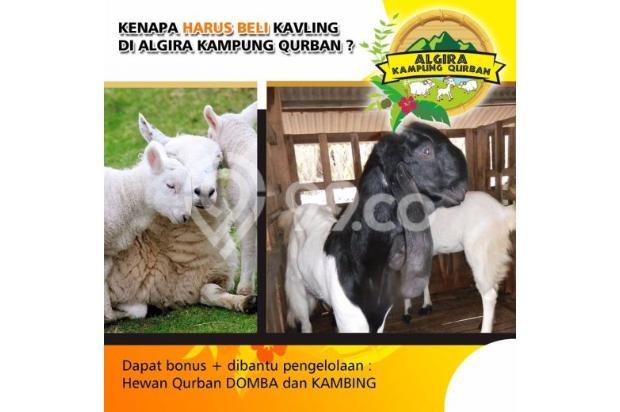 Kavling Wisata ternak di Bogor Algira Kampung Qurban 12640503