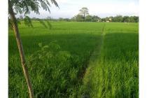 Sawah murah strategis di barat Koramil Tasikmadu, Karanganyar