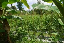 Actively farmed land for sale in Kerta – Payangan