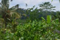 Land with stunning views for sale in Kerta - Payangan