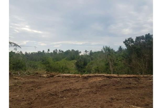 Kavling Bonian Pinggir Jalan Desa 8400907