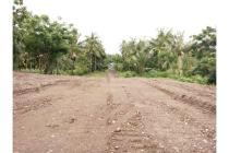 Tanah-Buleleng-4