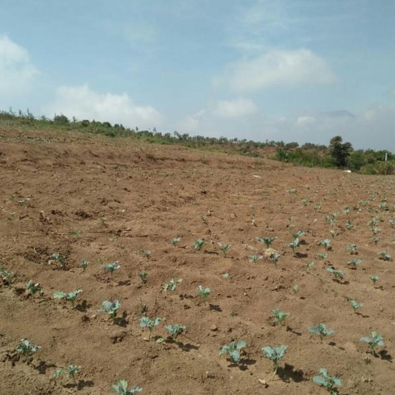 Tanah murah dan produktif Jurangkuali Batu