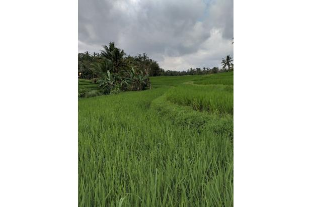 Rp1,34mily Tanah Dijual