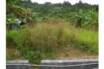 Dijual tanah 4, 276 Ha di Gunung Tunggal Loa bakung