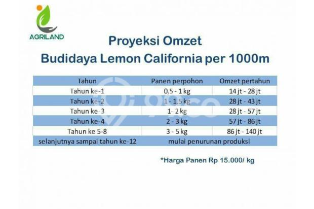 Dijual Tanah Kavling Kebun Produktif 12299491