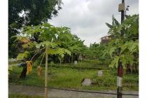 Lokasi Startegis Jual Cepat Tanah Raya Cangkir Driyorejo Gresik