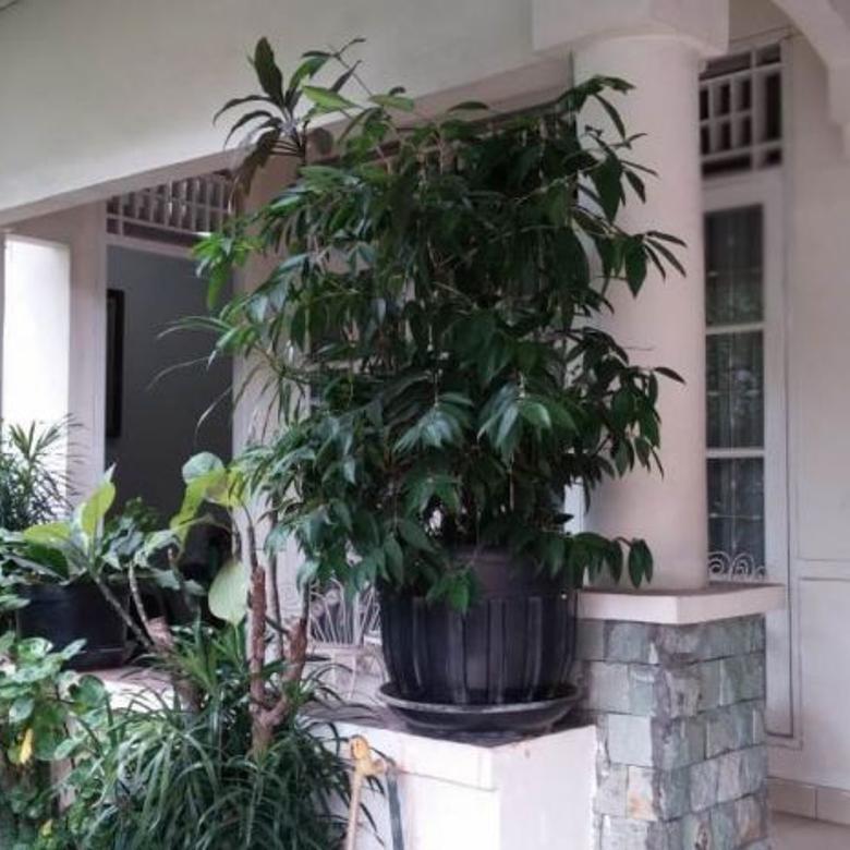Rumah Dijual Cepat Di Bintaro Sektor 9 Bintaro Jaya