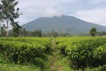 tanah kavling dijual murah di cugenang cipanas lokasi dekat puncak