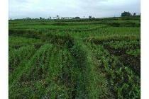 Tanah Sawah MURAH STRATEGS Di pinggir jl ry pariwisata dekatTarogong GARUT