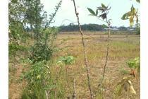 Tanah Matang di dekat Transmart Tasikmalaya