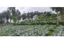 Tanah Murah di Maribaya Cibodas Lembang Bandung