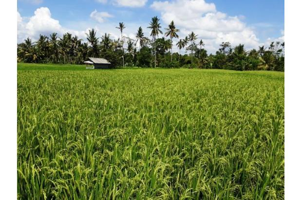 Rp10,7mily Tanah Dijual