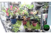 Rumah-Yogyakarta-6
