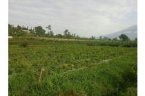 Dijual Tanah kebun Cocok untuk Investasi dan pertanian