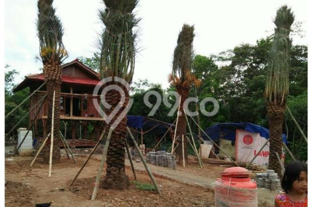 Kavling Luas Harga Murah Bonus 5  Pohon Kurma 12398152