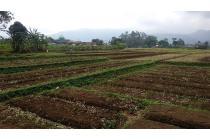 Tanah luas di Jl. Raya Kamojang, Sukarasa, Kec. Samarang