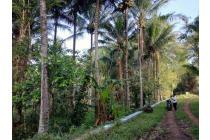 Tanah Malang Murah Cocok Utk perumahan, Villa dll Bonus 30an Pohon Kelapa