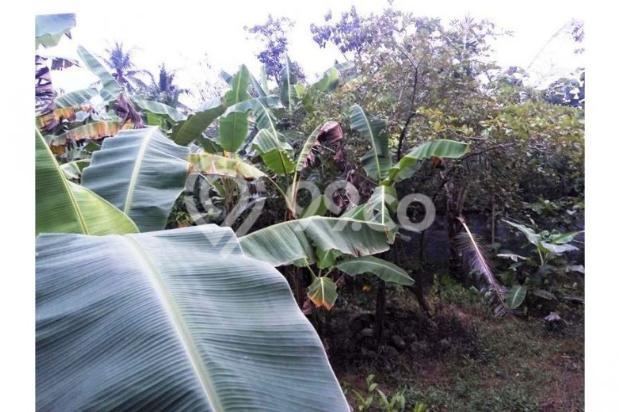 Cari Rumah Area Jogja, Dijual Rumah di Argomulyo  Dekat Jalan Bibis 9837849