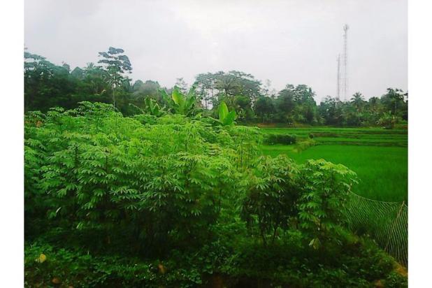 Tanah bagus seluas = 2,100M2 (Cibadak-Sukamakmur) 5408196