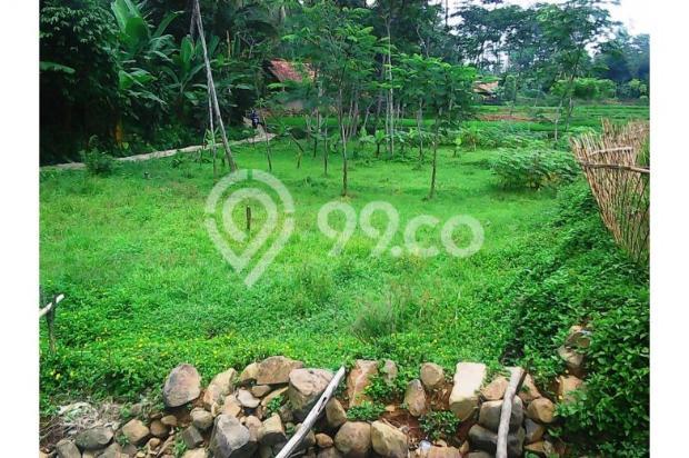 Tanah bagus seluas = 2,100M2 (Cibadak-Sukamakmur) 5408219
