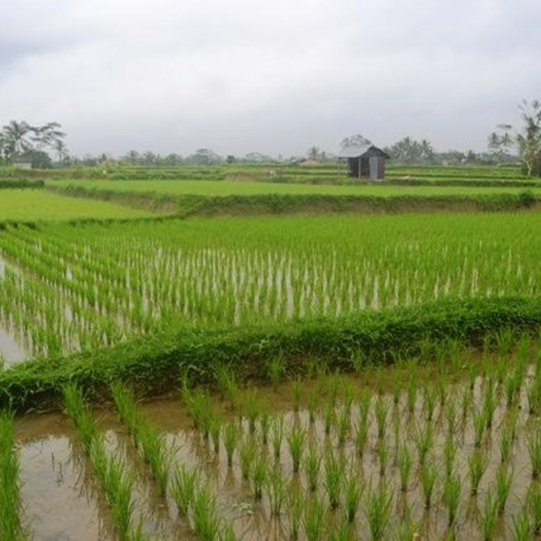 Tanah Strategis View Sawah dan villa di Ubud Tegalalang