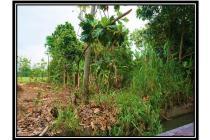 Kavling Sudah Urug, Tulangan Sidoarjo Jawa Timur