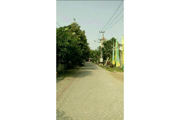 rumah mewah lontar dekat ptc surabaya 18272763